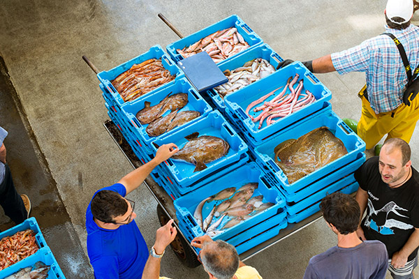 At the auction, the fish merchant buys the beautiful lots of fresh fish