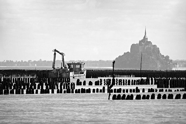 View of Mont Saint-Michel bay at low tide and mussel farming on wooden stakes.